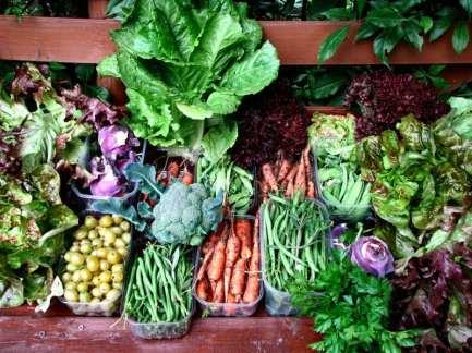 gemuese-pflanzen-garten-karotten-salat-kopfsalat-petersilie